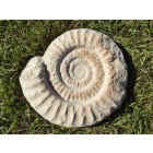 Snail steppies (sand)
